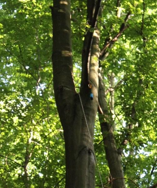 Die Dose im Baum