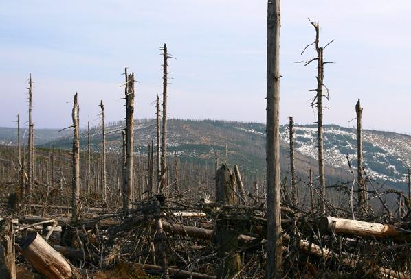 Debrník za minulou generací lesa