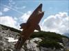 Im Rachen des Dachsteinhais