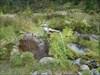 A fonte da Água das Lombadas