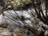 Por entre ramos log image