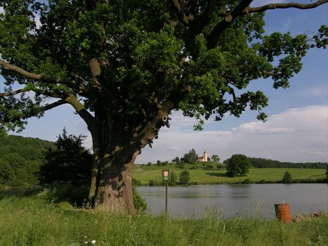 Výhled od dubu na rybník a Byšičky
