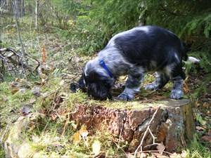 Malva i skogen för första gången