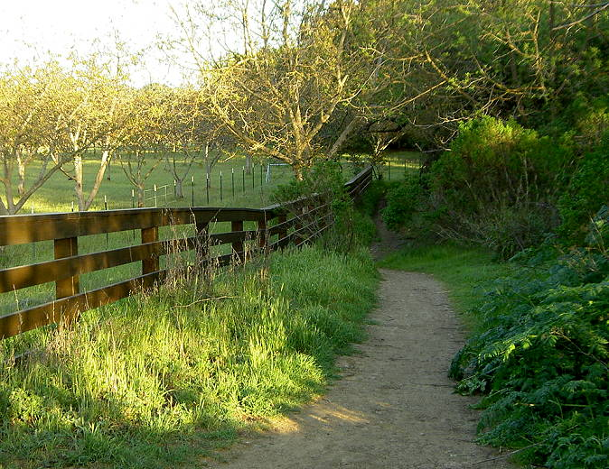 Calero Creek Trail by the IBM orchard