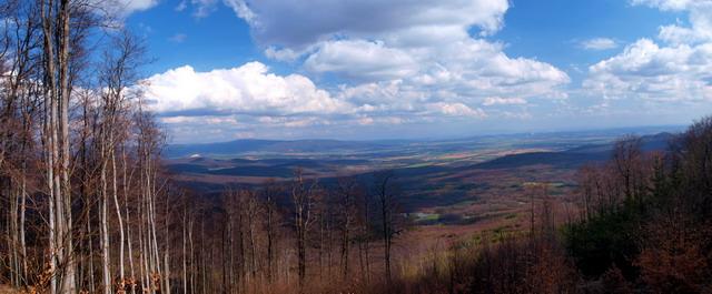 Pohľad z lesnej cesty