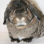 Shadow's Friend