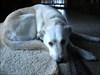 Chap, unser Cache-Suchhund