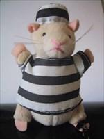 Rocky. (An innocent hamster)