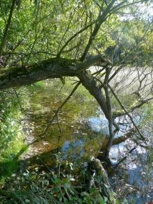 U hráze dolníhoz Racovských rybníčků