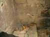Tentativa de fogueira para aquecer os pés [:D] log image