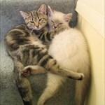 kittyclan