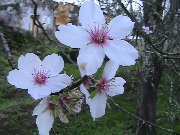 Flor do campo.JPG