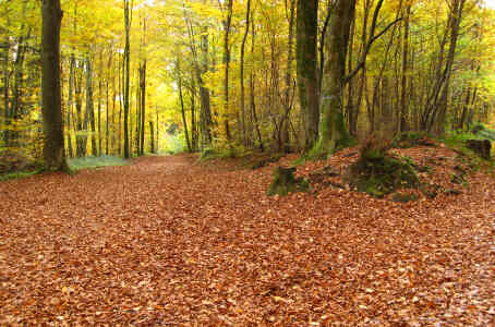 Chemin de Chailluz