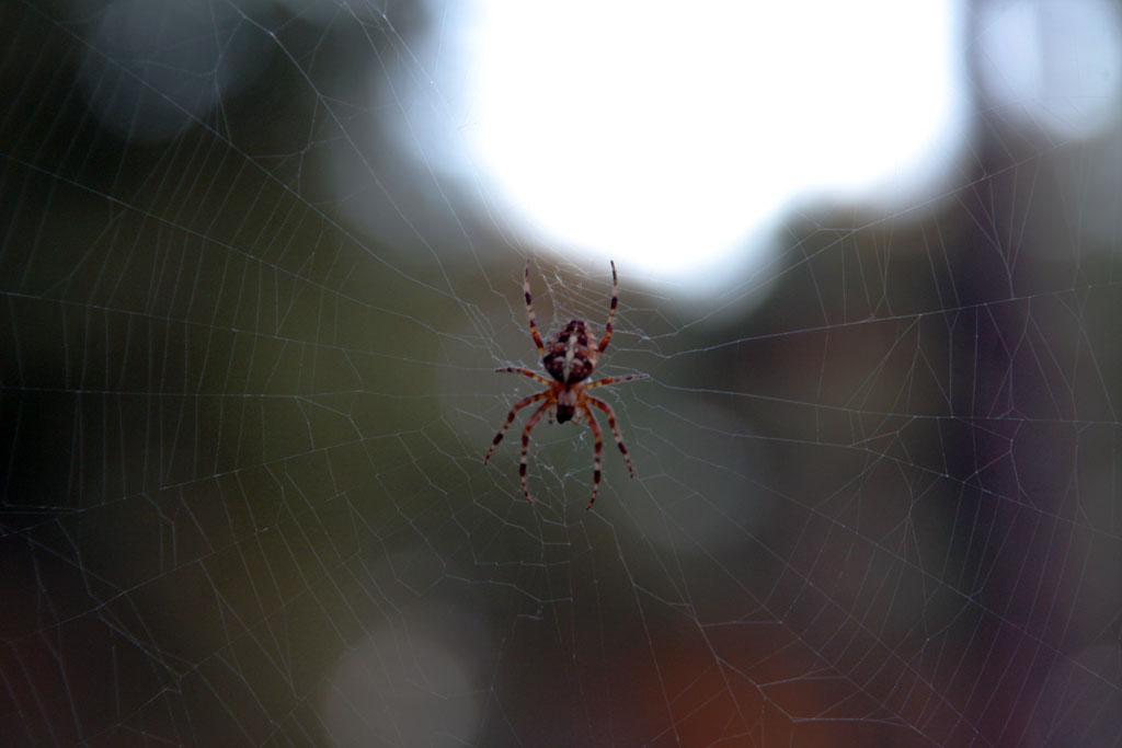 Een web van paden, kies het juiste pad
