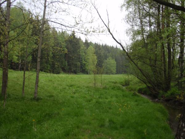 Die Triebischwiesen