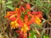 Nice orange flowers