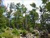 Urwald am Weg zum Breitenberg.