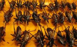 Cvrčci na špejli