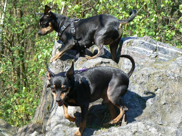 Hubert an Tiffany, the dogs