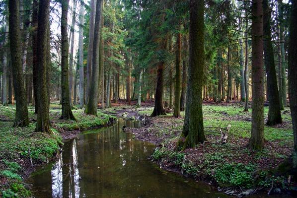 Zlatý potok v lese u studánky