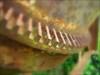 Detalhe da dentadura da trituradora de galinhas