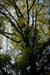 Pregada no céu. log image