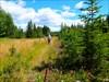 tracks slowly disappearing under vegetation