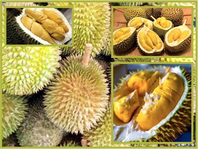 Durian 2