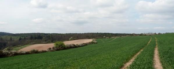 Ploché pole na Špičáku