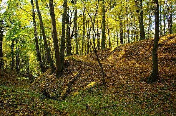 Prirodni rezervace Zabela