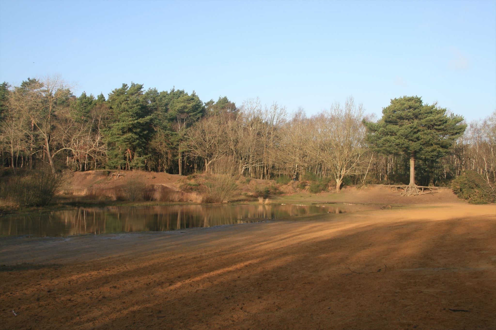 5. The Sandpit on Horsell Common