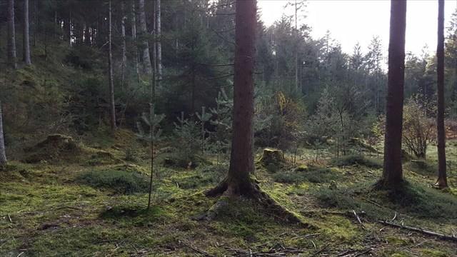 Baumstümpfe