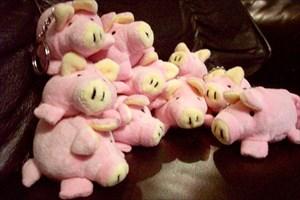pink porcine pile