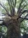 Arvore log image