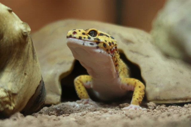 avatar de gex_reptile