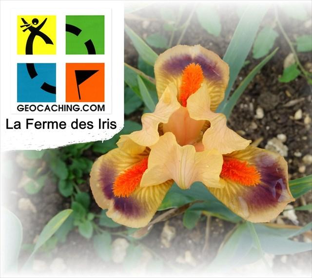 avatar de La Ferme des Iris