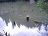 Lacul Rosu 13