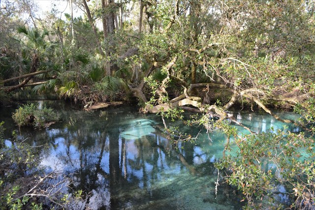 thanks you very much for the earthcache gc3btrv fern hammock springs  earthcache  in florida united      rh   geocaching