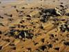 Beach Temple13