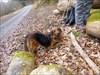 Asana: Der Hund gepaart mit Sphinx