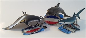 Best of Scuba  Manta - Dolphin - Shark