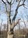 The clement oak-4