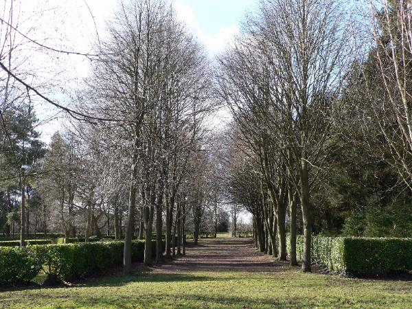 Lime trees line the Nave