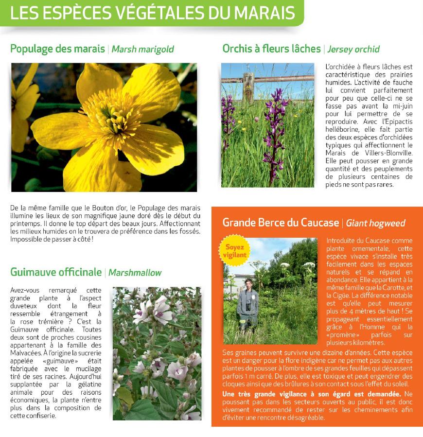 Les espèces végétales du marais - Source : https://www.indeauville.fr - Crédit photo : Grégory Wait, P.Le Bris, P.Mignon