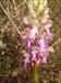 Flora da Serra d