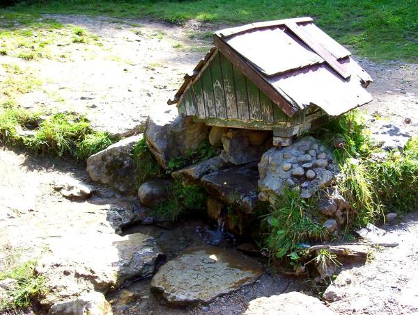 Kyselka - borová sihot / fresh spring