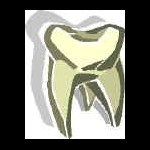 Tooth_Molar
