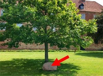 Sten ved træ