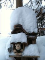 Cheeta placed in a snowy mouse house