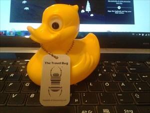 Ducky Mallard